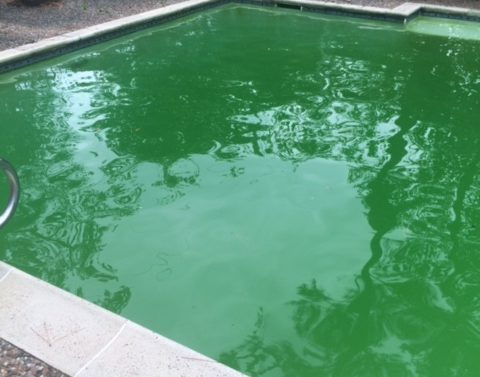 Don't Turn Your Pool Green Like The Olympics