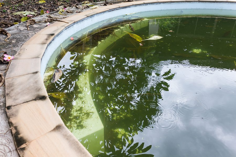 Why You Need A Pool Cleaning Service For That Neglected Pool