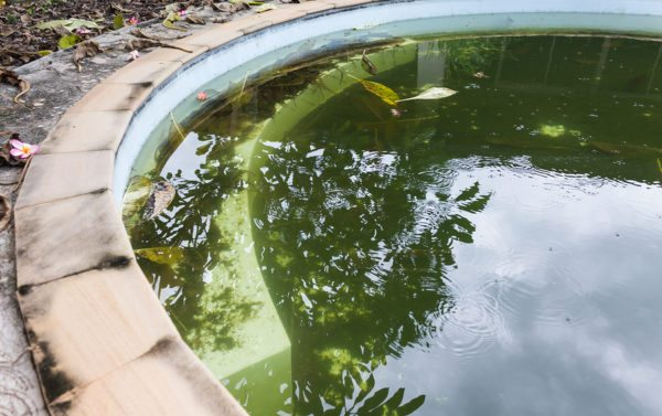 Neglecting Pool Cleaning Can Be Disastrous