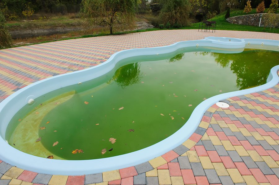 Clean Green Pools With Maintenance Or A One Time Pool