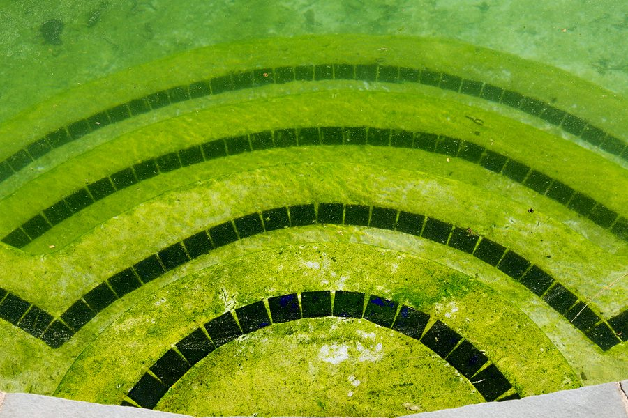 What Happens If You Neglect Your Pool?