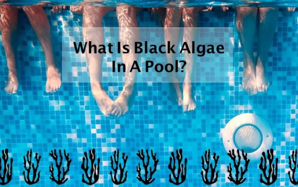 What is black algae in a pool?
